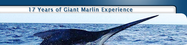 17 Years of Giant Marlin Experience